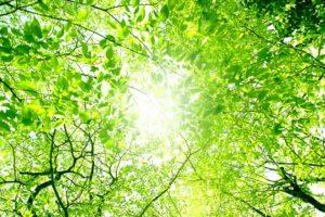 グリーンに差し込む光
