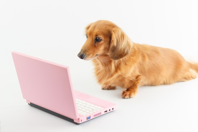 パソコンを見る犬